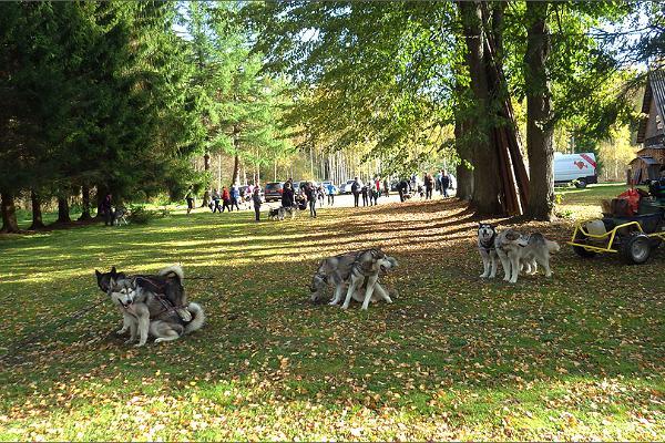 Собаки Центра тренировки ездовых собак