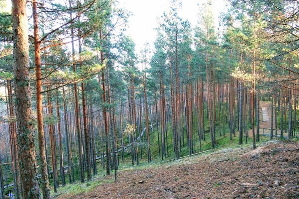 RMK:n Rannametsa-Tolkusen luontopolku