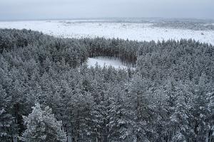 Природная учебная тропа Раннаметса-Толкузе Центра управления государственным лесом (RMK)