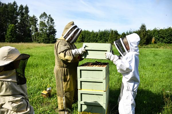 Aeglased hetked Tormikadaka talu mesilakülastusel