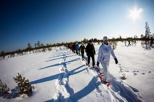 Winter snowshoe hike in Männikjärve bog