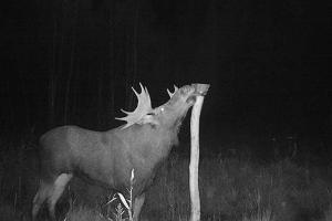 Night vision wildlife tour