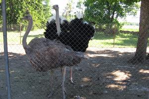 Rätsepa loomapark