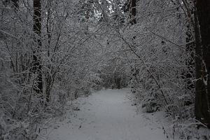 Apteekrimäe skogsled på vintern
