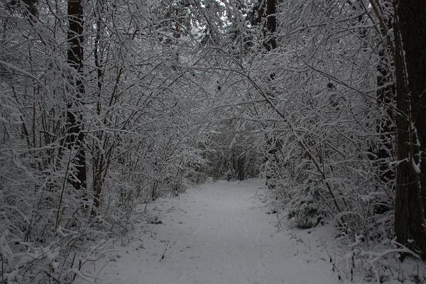 Apteekrimäen metsäpolku talvella