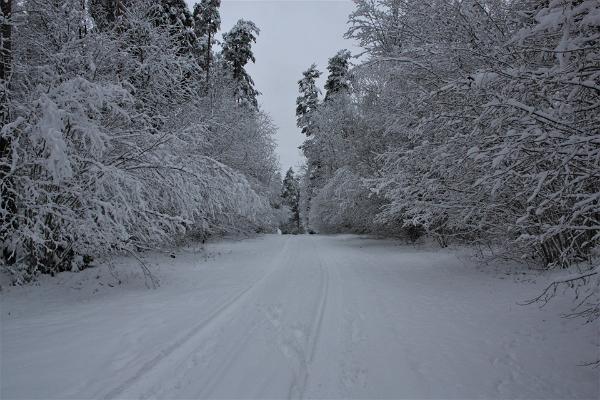Talv Otepää Looduspargis