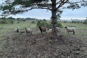 Unterkunft Kadakasuits, Schafe