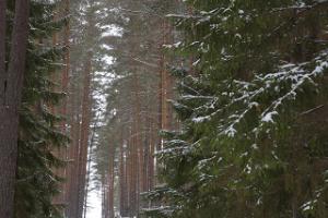 Wanderweg im Hochmoor Meenikunno