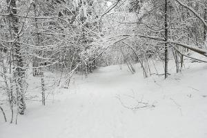 Отепяэский природный парк зимой