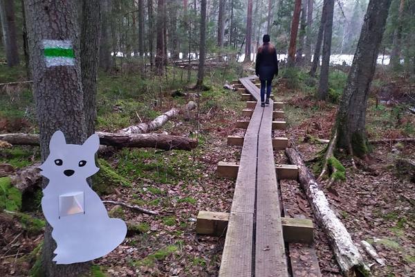 Wanderweg im Hochmoor Kakerdaja