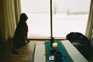 Vaade põhumaja suurest aknast lumisele Peipsi järvele