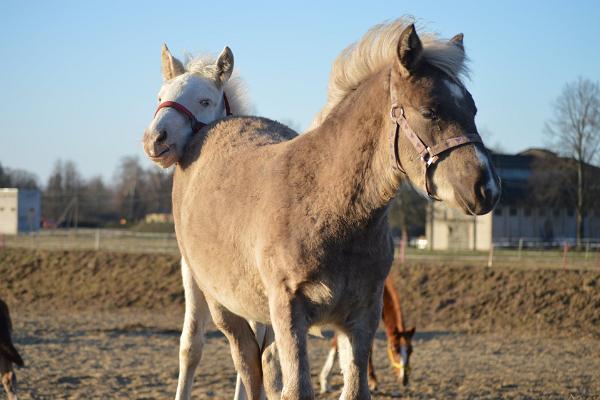 Tori Horse Breeding Farm