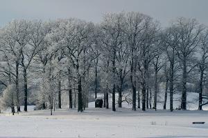 Pühajärve sõjatammik talvel
