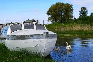 Accommodation in a sauna boat on Lake Peipus: MesiSpa and a swan with babies
