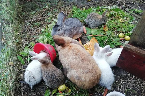 Tipu Nature School rabbits