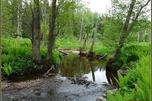 Koprarada Lahemaa Rahvuspargis