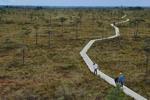 Bog trip in Estonia