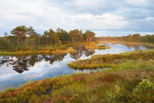 Bog lake in Estonia