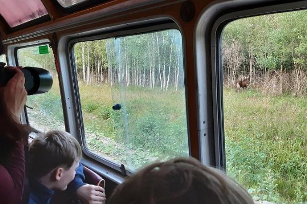 Elk watching in Estonia