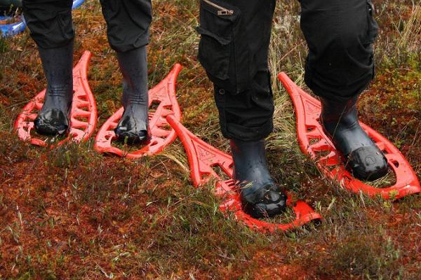 Bog shoeing in Estonia
