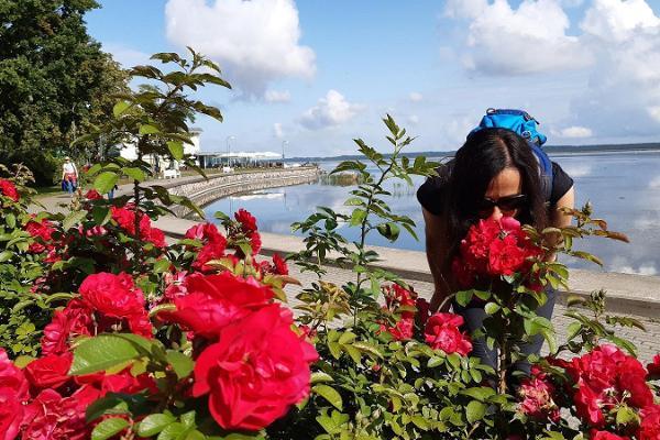 Roses of Haapsalu