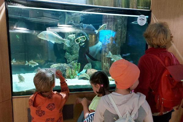 Järvemuuseumi akvaarium ja lapsed kalu uudistamas