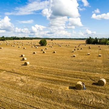 Estonian Field, by Rainer Suvirand