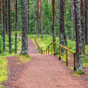 Forest by Sven Zacek