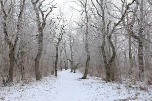Rakvere Tammiku õpperada talvel