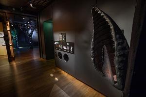 "Näitus ""Hirmus armas nahkhiir"""