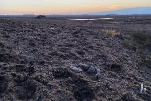 Retk huntide rabas Laukesoos koos kogenud loodusfotograafiga