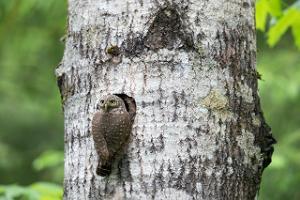 Loodusfotograafia algtõed- retk loodusfotograafiga
