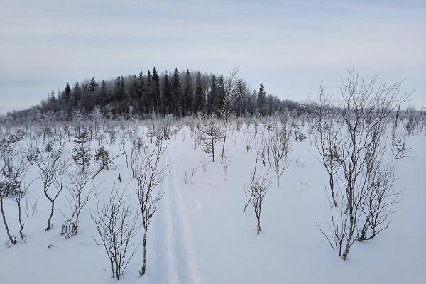 """""""Nature Tours Estonia"""" pārgājiens ar sniega kurpēm uz Peipsivēres dabas rezervāta purva saliņām"""