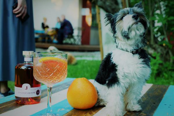 ULA bar, pets, cocktails, dog