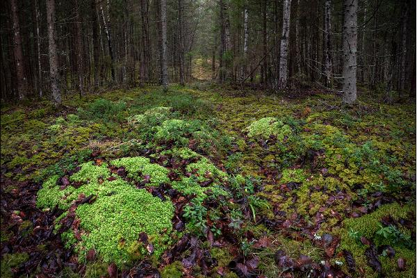 Ojaäärse forest trail
