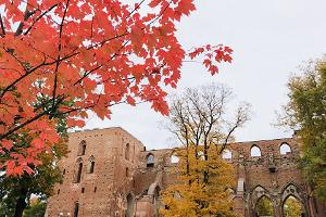 Ruins of Tartu Cathedral in autumn and yellow and red maple trees