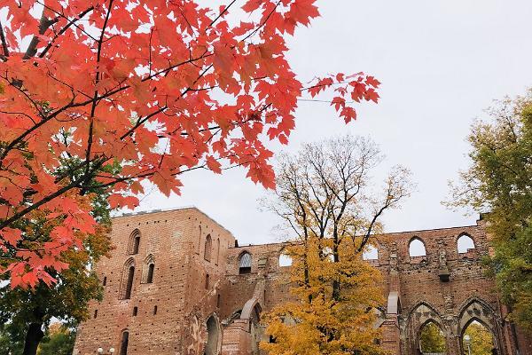 Tartu Domkyrkas ruiner under hösten och gula och röda lönnträd