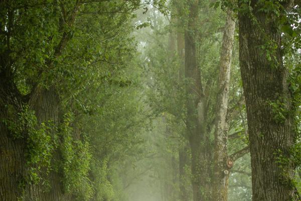 Kirjanduslik jalutuskäik Tartus: Supilinna puudeallee udus