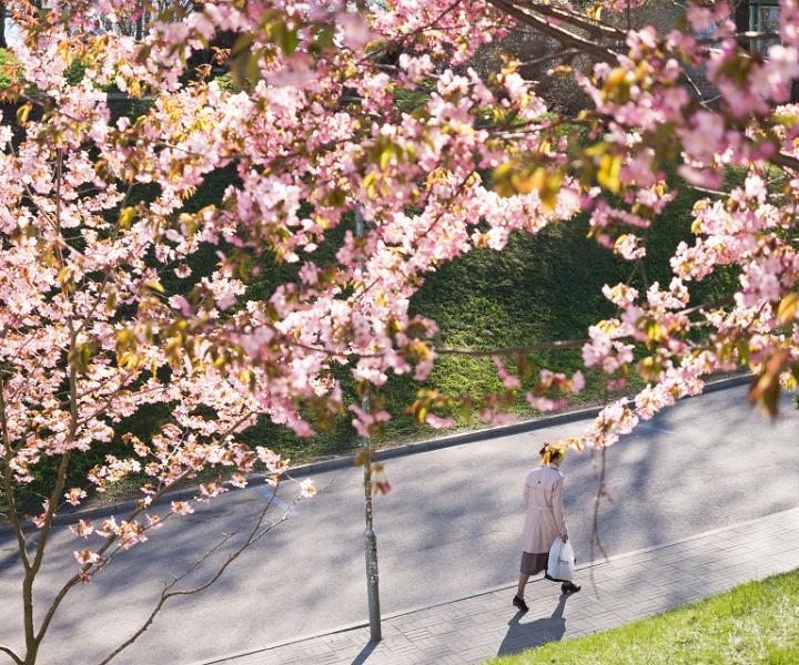 Pavasaris Tallinā