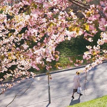 Springtime in Tallinn