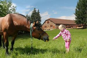 Estnisches Landwirtschaftsmuseum, ein kleines Mädchen bietet einem Pferd eine Butterblume an.