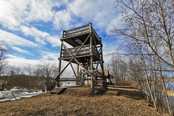 Penijõe linnuvaatlustorn