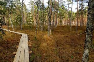 Teringi study trail