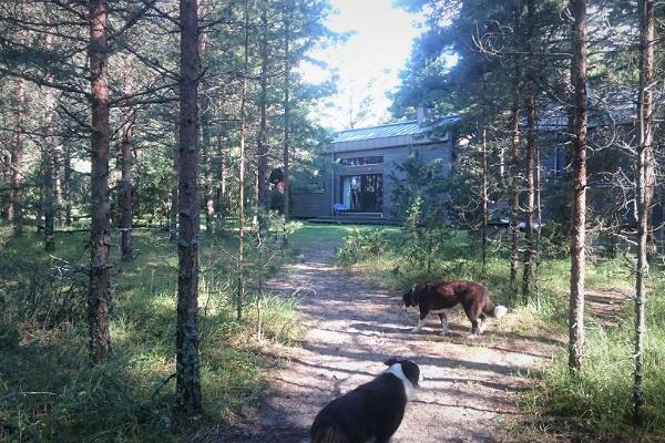Гостиница Surfhunt - Hundimaja («Волчий дом»), природный туризм, семейный отдых, пляжный отпуск и домашие животные