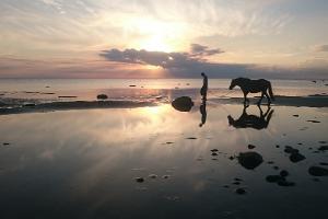 """Surfhunt Majutus – Hundimaja (""""Wolfshaus""""), Naturtourismus, Familienurlaub, Strandfreuden und niedliche Haustiere"""