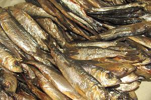 Paikallinen pala - juuri savustettu kala todelliselta kihnulaiselta kalastajalta
