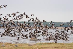 Paljasāres aizsardzības teritorijas putnu vērošanas torņi