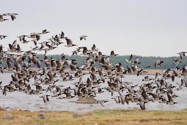 Paljassaare hoiuala linnuvaatlustornid