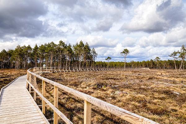 Tudu bog lake and forest hut