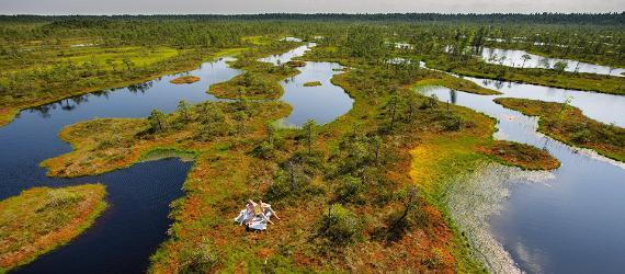 Igaunijas dabas vasarā